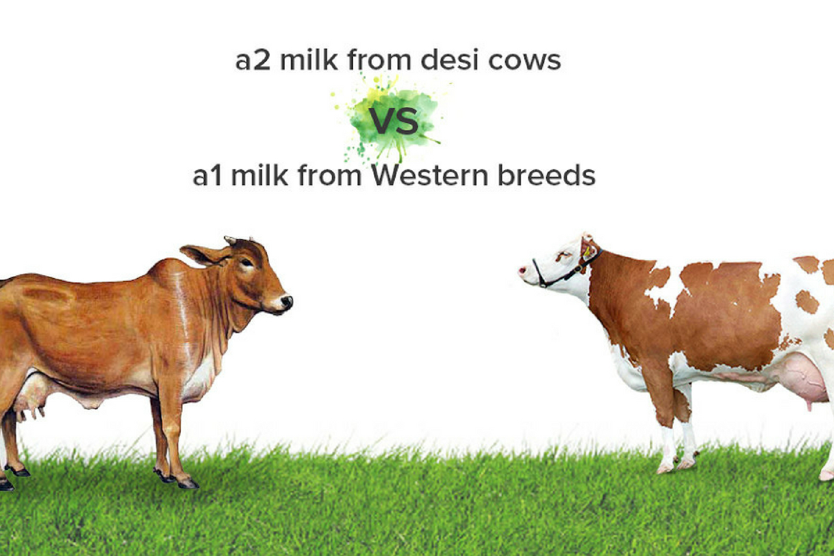 A1 or A2 Milk: What is best and safe for you?