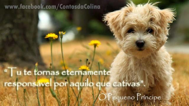 Frases com fotos para Facebook Google Plus e outras redes sociais-cachorro
