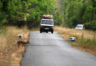 spotted deer, road kills, roads in kmtr,