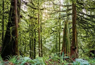 Negara dengan Hutan Terluas di Dunia