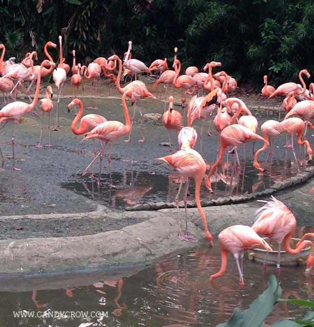 7 Things to do in Singapore in 4 Days, jurong bird park
