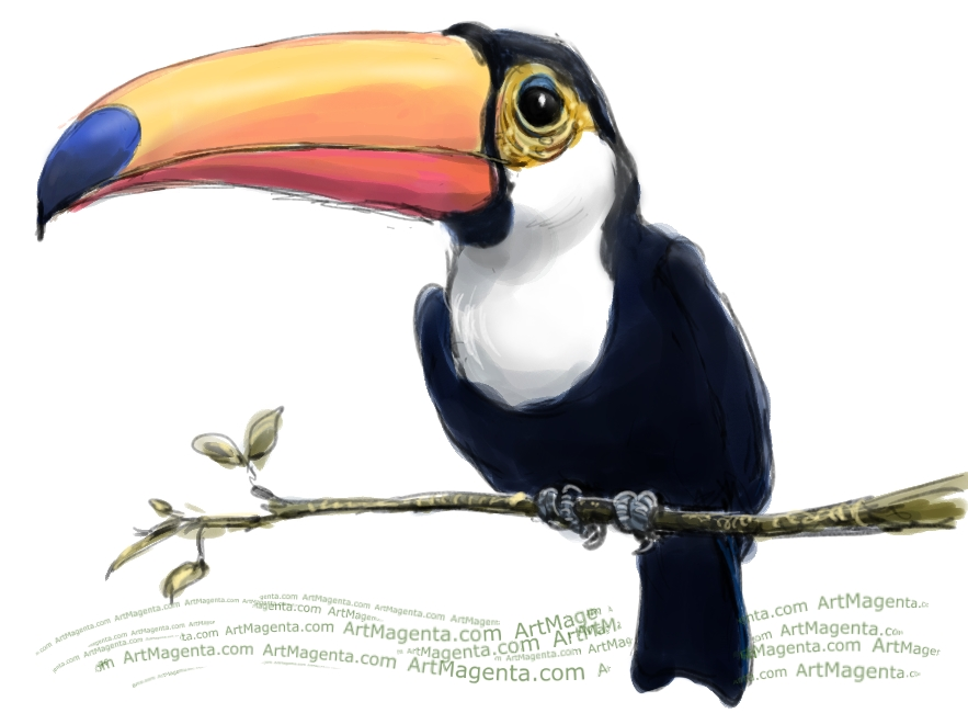 Toucan sketch painting. Bird art drawing by illustrator Artmagenta