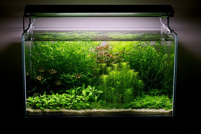 Modern Lighting Systems For Freshwater Aquarium Aquascape