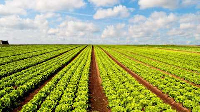 Collateral Free Agricultural Loans