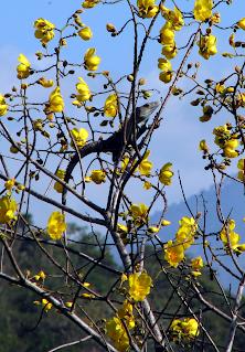 iguana eating tree flowers