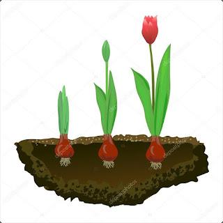 Bitki Yetiştiriciliği  2