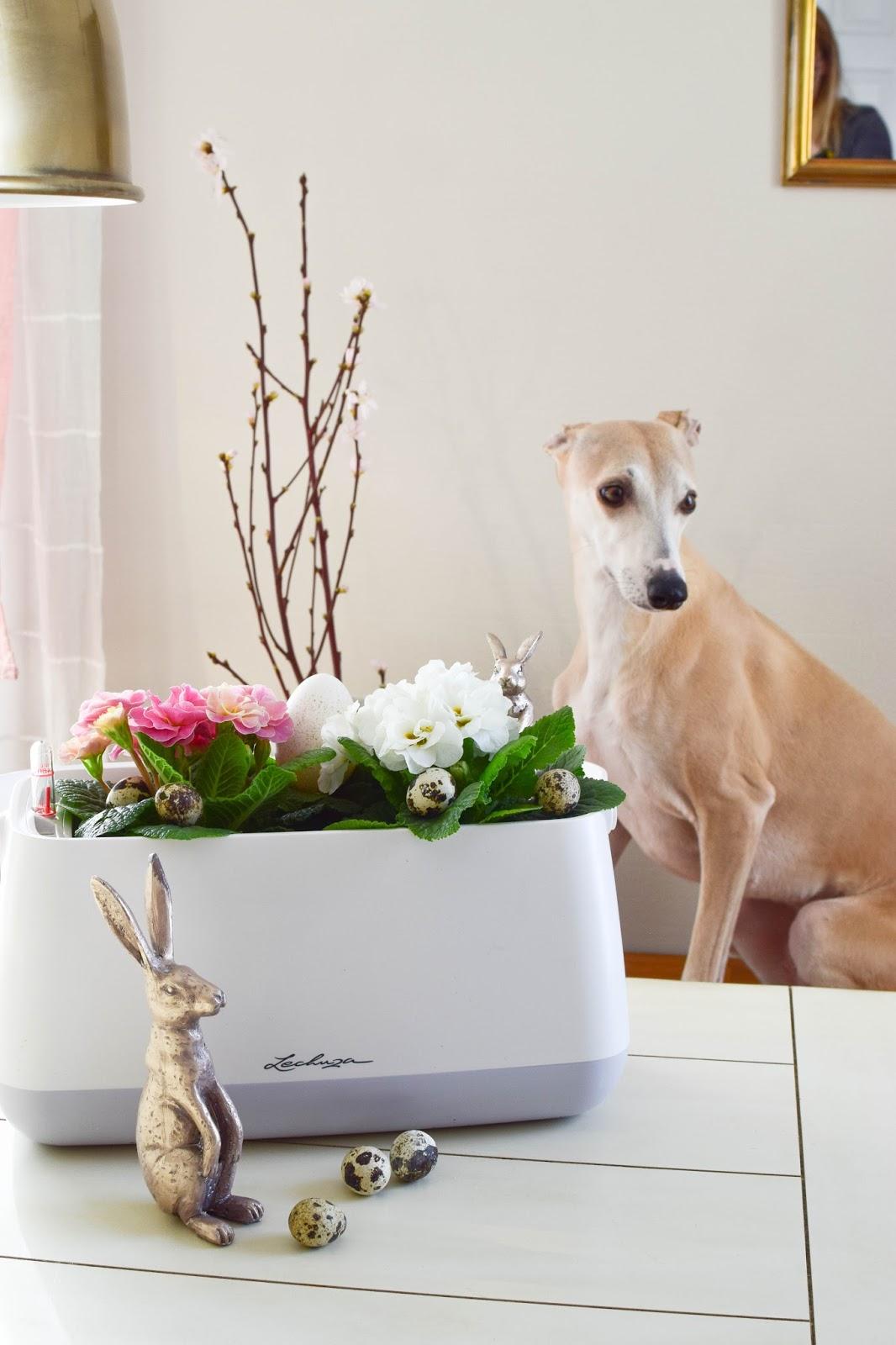 Frühlingsdeko und das perfekte Bewässerungssystem für alle Zimmerpflanzen und Küchenkräuter: YULA von Lechuza. DIY Osterkorb. Werbung