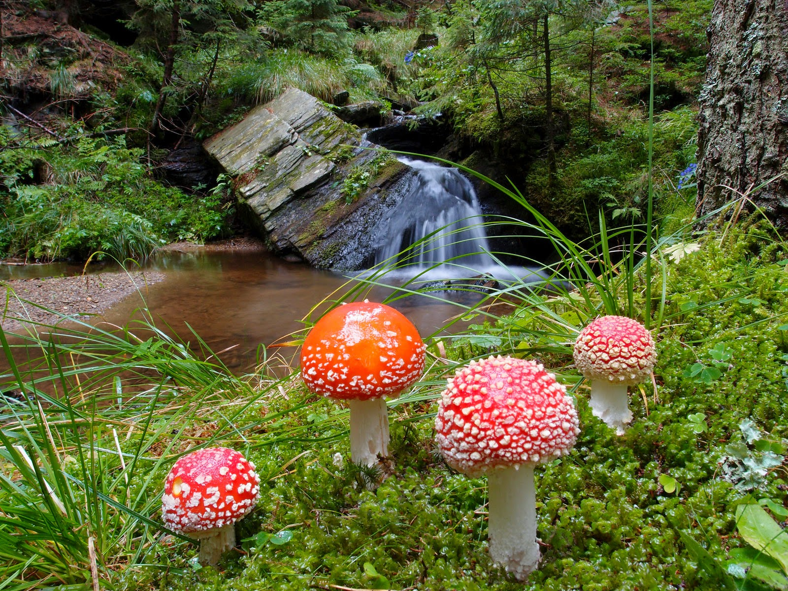 Sculpture Hd Wallpapers Photography Amanita Muscaria Wallpapers Art For Your
