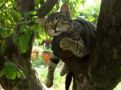 Cute Cats Kitty Pets 12
