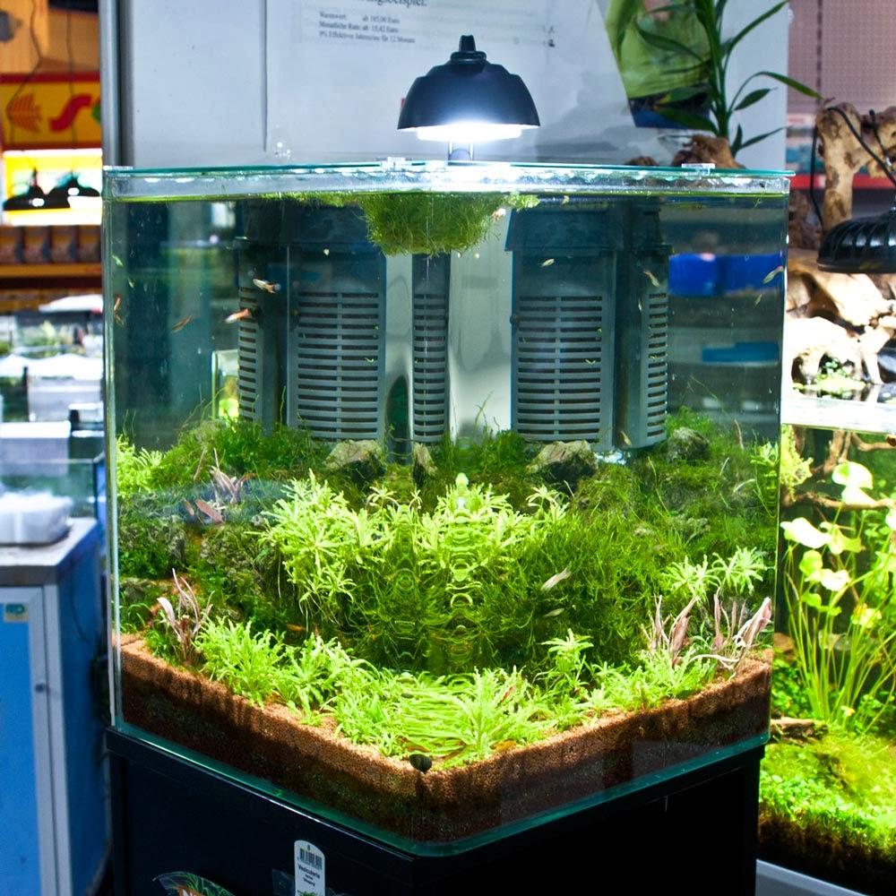 zoo zajac 39 s aquaristik blog ratgeber nano aquaristik. Black Bedroom Furniture Sets. Home Design Ideas