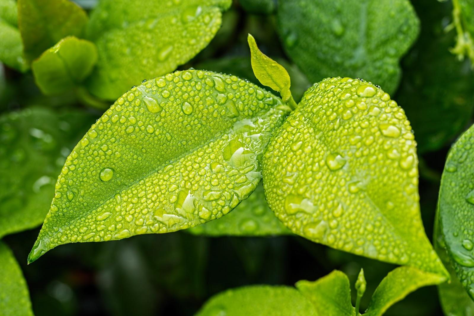 ecología, ambiental, vedica, naturaleza