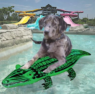 Image result for nipclub water park