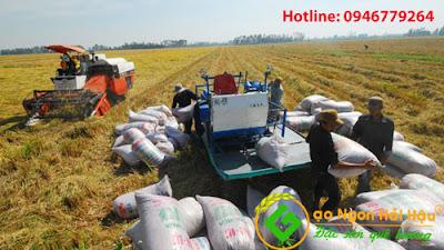 Quy trình thu mua nguyên liệu khô để sản xuất gạo sạch Hải Hậu