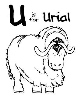 Letter U -Urial