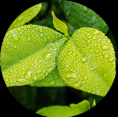 Folha com goticulas de água. A hidratação dos cabelos é como a das plantas?