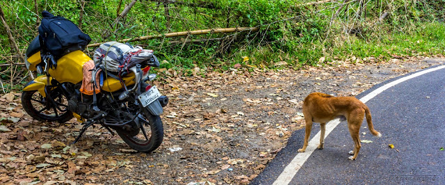 Headless dog near a motorbike
