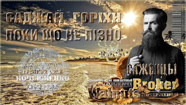 Скороплідний грецкий горіх сорт Кочерженко 0985674877, 0957351986 Walnuts Broker