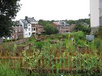 De samentuin van Spa, potager de Spa, moestuin, stadsmoestuin, buurtmoestuin, VELT