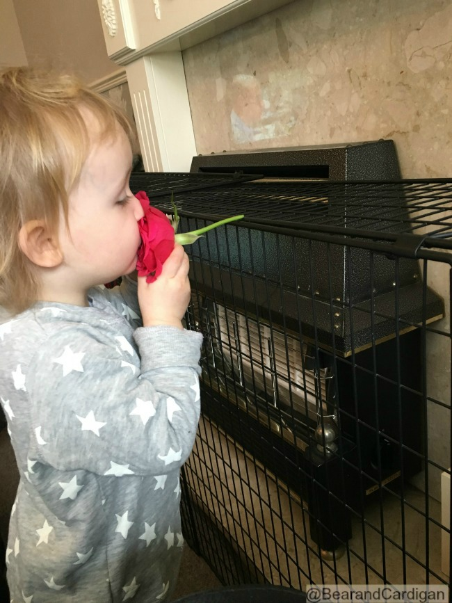 A Wish, A Kiss and a Dragon. Toddler kissing a red rose