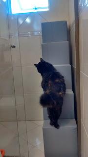 gatos dentro de casa