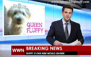 Fluffy the puppy's world domination plan.