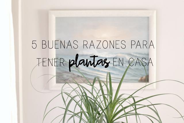 http://mediasytintas.blogspot.com/2017/04/5-buenas-razones-para-tener-plantas-en.html