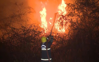 No Sertão da Paraíba, incêndio atinge plantações de coco