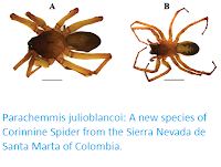 https://sciencythoughts.blogspot.com/2017/07/parachemmis-julioblancoi-new-species-of.html