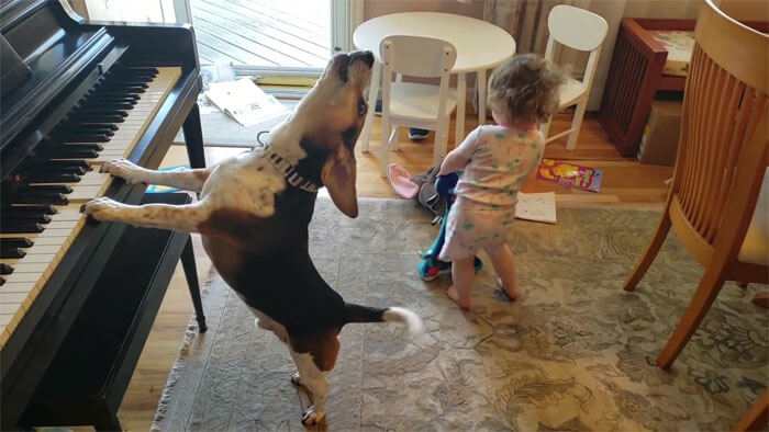 Dad Captured A Video Of His Daughter Dancing To Their Dog Playing The Piano