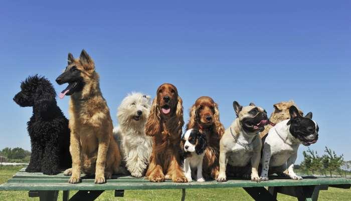 12 κανόνες εκπαίδευσης σκύλων