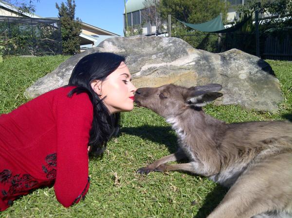 Katy Perry e canguru