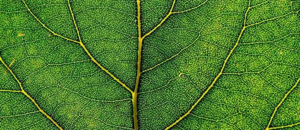 Los cloroplastos - Biología