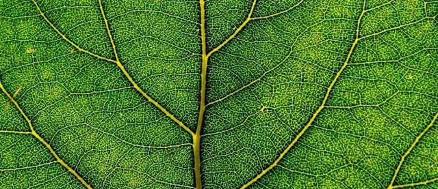 Hoja, cloroplastos y biologia