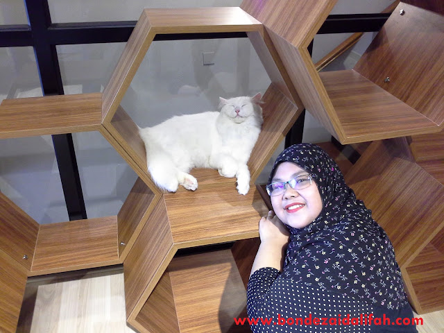CAT SIGNATURE CAFE & STUDIO