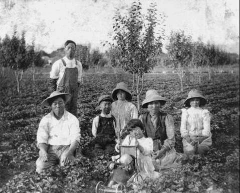Mississippi Delta Chinese Farm Laborers