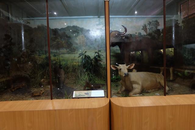 gambar museum zoologi bogor