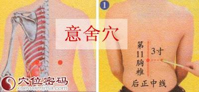 意舍穴位 | 意舍穴痛位置 - 穴道按摩經絡圖解 | Source:xueweitu.iiyun.com