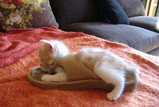 靴が大好きな可愛い猫9