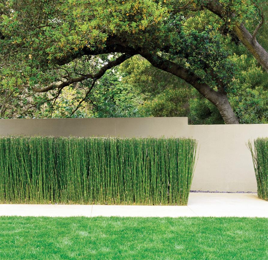 The paper mulberry garden plants equisetum for Good garden design