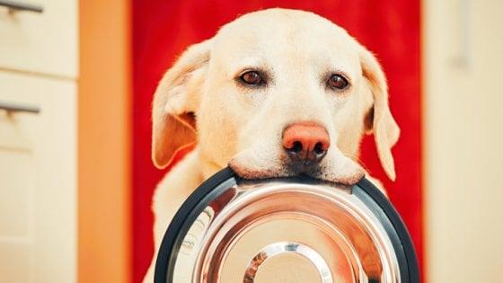 Buongiornolink - Cane, il benessere è nel microbioma ecco la dieta ideale