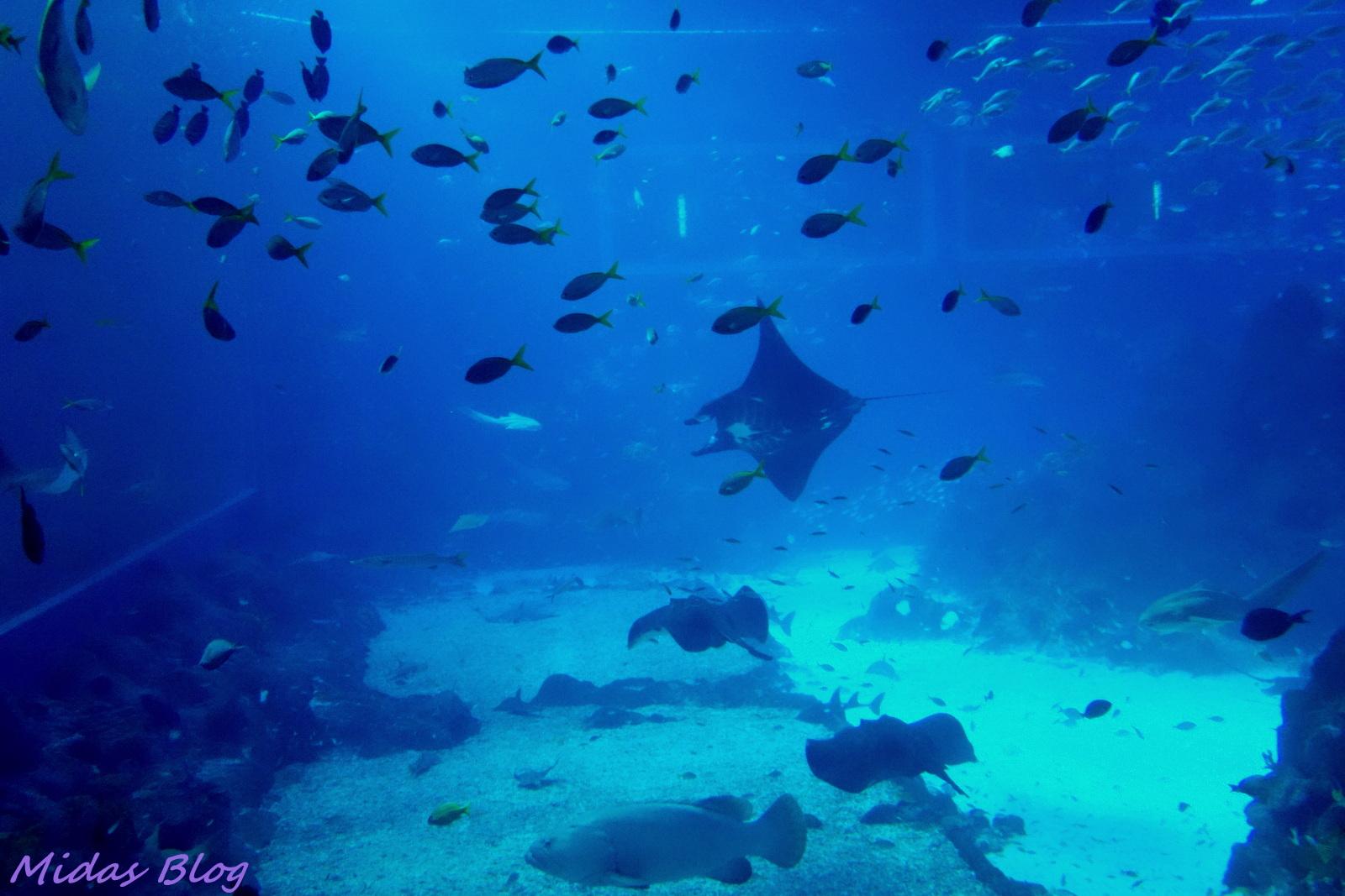 Midas Food N Travel Blog S E A Aquarium Marine Life