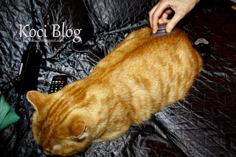 2afce36f12c087 Koci Blog: zakupy na języczek i dla futerka