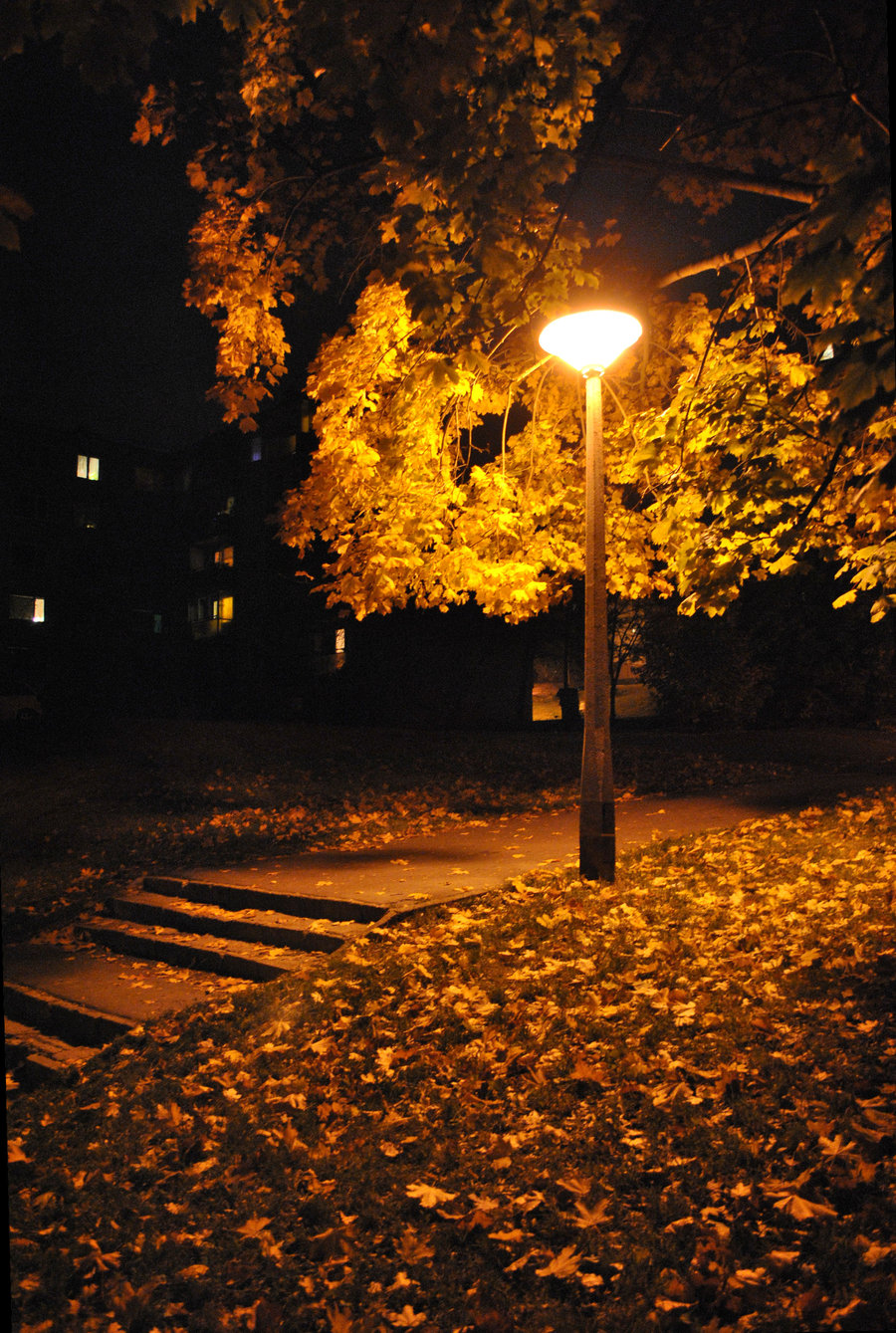 Tree With Leaves Falling Wallpaper Autumn Night Autumn Posters Picture