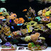 Marine Reef Aquarium Supplies