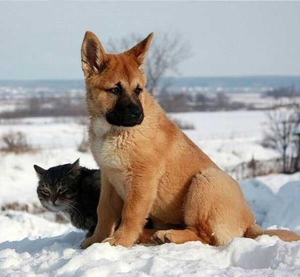 Kata siapa kucing dan anjing tidak bisa bersahabat