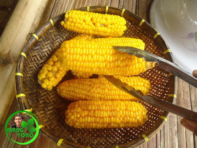 Manfaat dan khasiat dari jagung rebus
