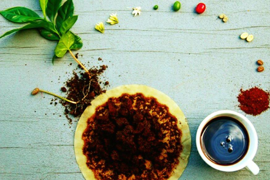Coffea Arabica rasa dan harga kopi arabika di makassar tata cara tanam