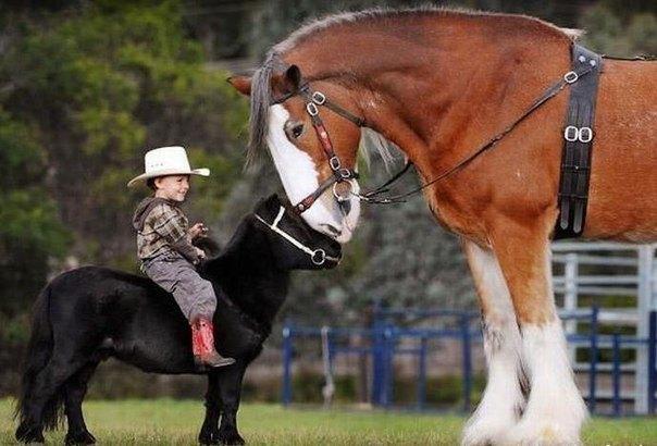 Ajari Si kecil Berkuda Yuk, Tanpa Diketahui Hal Ini Bisa Saja Terjadi!