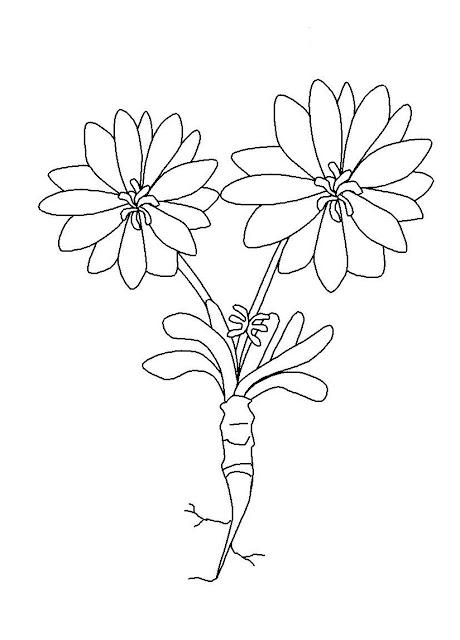 Fiore Disegno da stampare e Colorare