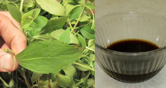stevia te ajuta sa renunti la fumat si taie pofta de nicotina